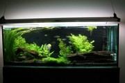 5.5 foot large aquarium fish tank and stand