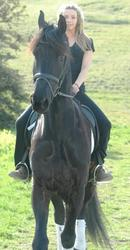 Lovely Friesian Gelding Horse