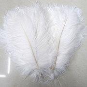 Decorative ostrich feathers
