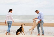 Hire Us for Dog Training in Sydney | Cause For Paws
