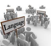 Get The Best Professional Translation Services- DAMMANN German-English