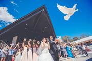 Professional Videographers for Wedding