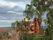 Get  Affordable Tree Services Sydney