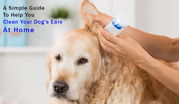 A Simple Guide To Help You Clean Your Dog's Ears At Home