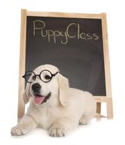 Best Puppy School Sydney