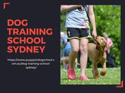 Dog Training School Sydney