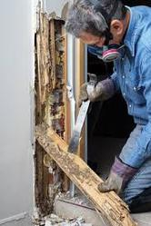 Choose the Best Pest Control Company for Termite Inspection Forster