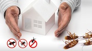 Experience the most advanced Termite inspection Sydney