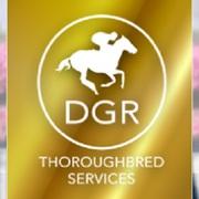 DGR THOROUGHBRED SERVICES PTY. LTD.