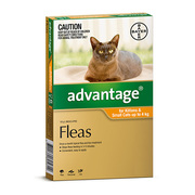 Advocate for Kittens & Small Cats up to 4kg