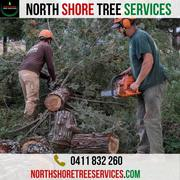 Tree Services Performed By North Shore Tree Services Experts