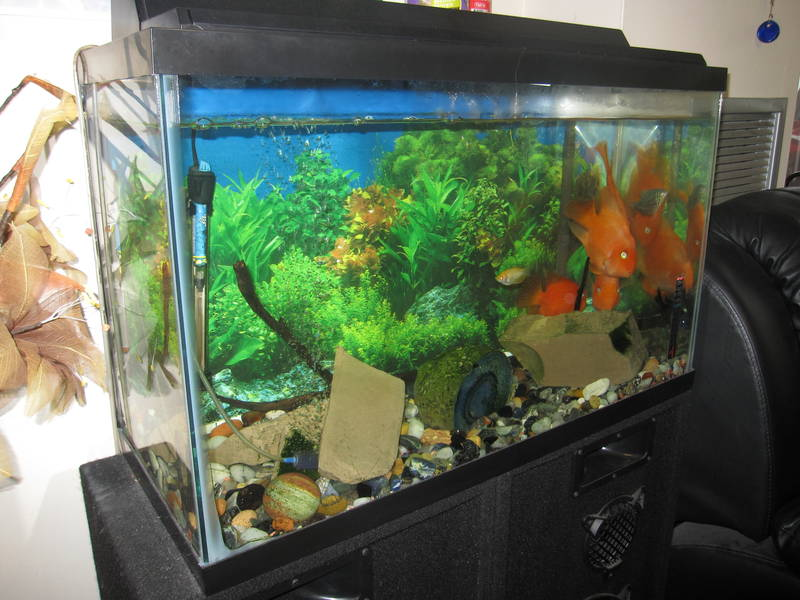 30 gallon fish tank number of fish 30 gallon tank with Thirty gallon fish tank