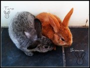 URGENTLY selling BABY RABBITS - name trained!